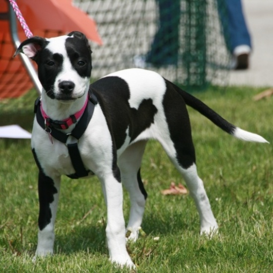 Humane Society of Summit County: Bark in the Park 2018