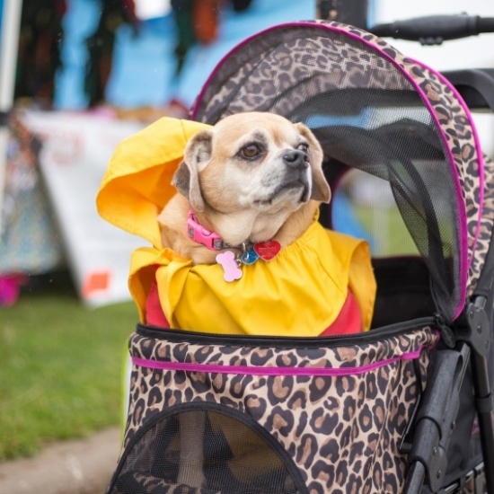 Humane Society of Summit County: Bark in the Park 2018 Photo