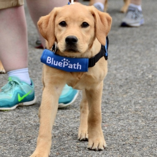 BluePath Walkathon 2018 Photo