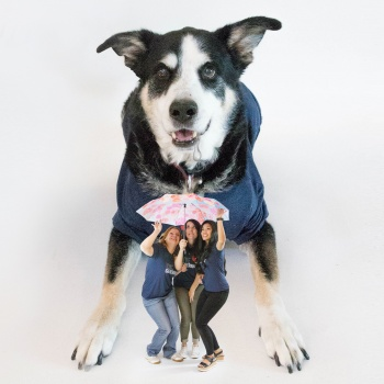 3 Barks for Thrivent Image