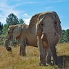 elephantsanctuaryint's profile image - click for profile