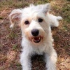 dogswithoutborders's profile image - click for profile